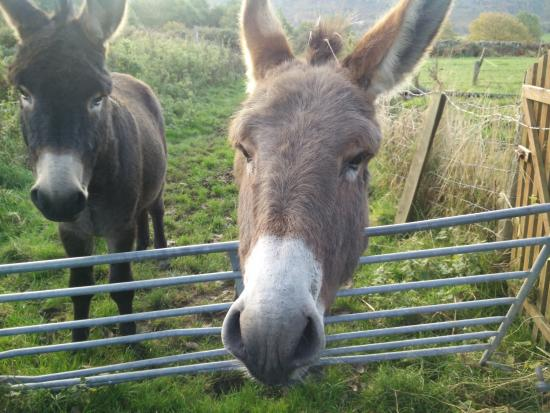 Holmrook, UK: the friendly neigh...bors