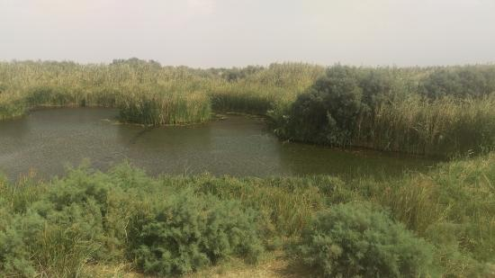 Azraq Wetland Reserve: здесь живет цапля
