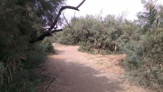 Azraq Wetland Reserve: там на неведомых дорожках