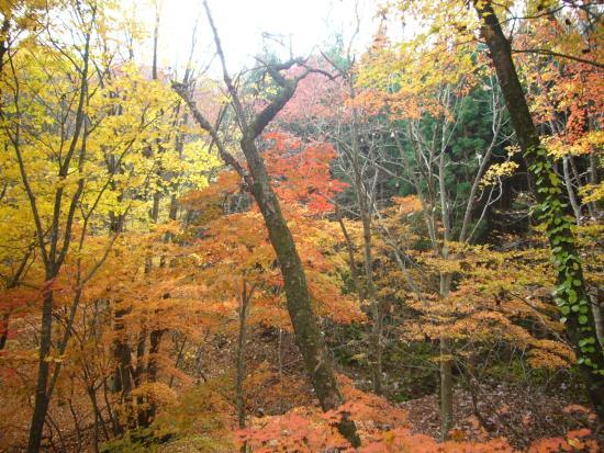 Murakko Commercial Museum: 裏山の紅葉
