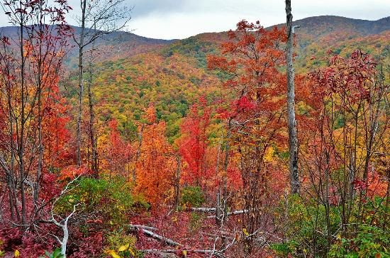 Tennessee: Fall Foliage along Gregory Ridge Trail
