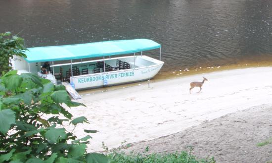 Keurbooms River Ferries : Bambi on the beach