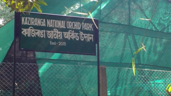 Kaziranga National Park, อินเดีย: KAZIRANGA NATIONAL ORCHID PARK