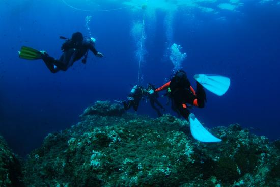 Ischia Diving