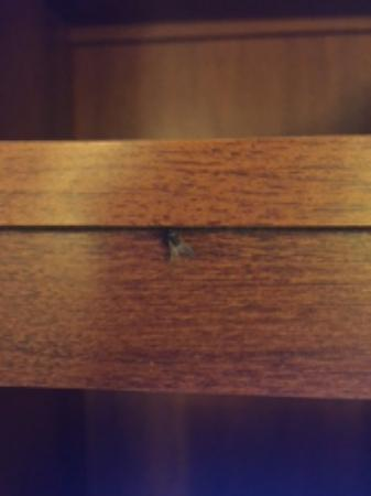 Inn at Cemetery Hill: A fly I found on the tv stand.
