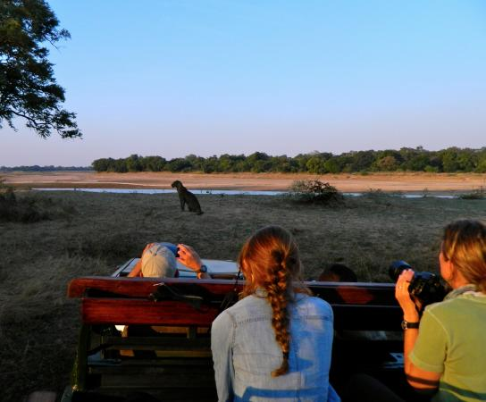 Thornicroft Lodge: 4 Leopards in one day!!