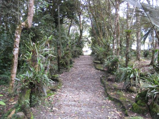 Cosanga, Ecuador: Walkway lined with orchids