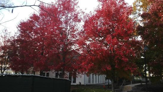Absecon, NJ: Beautiful fall colour
