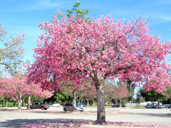 Beautiful Tree, Legg Lake Park, Whittier Narrows Recreation Area, South El Monte, CA