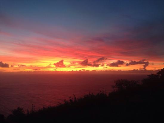 Madeira Native Motion: Blissful