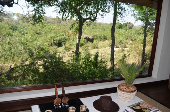 Londolozi Tree Camp : Elephant view from our lounge area in the room