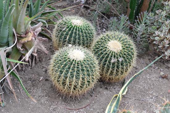 Donald M. Gordon Chinguacousy Park: Cacti trio