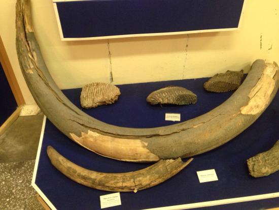 Svobodny, Rosja: Интересный музей, можно увидеть бивни мамонта и животных, обитающих в Амурской области.