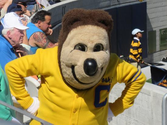 cal s mascot oski at california memorial stadium berkeley ca