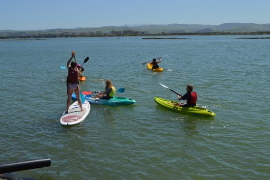Ahuriri Estuary Walk: Kayakers