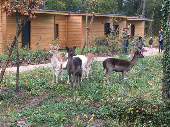 Le Domaine Du Bois Aux Daims - Les animaux Picture of Center Parcs Domaine Le Bois Aux Daims, Les Trois Moutiers TripAdvisor