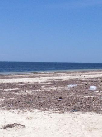 Cowrie Shell Beach Apartments : пляж