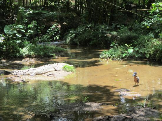 Pura Vida Spa Costa Rica Reviews