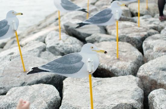 Sakushima : カモメの駐車場