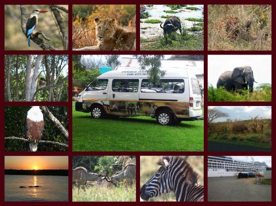 Amazulu Safaris