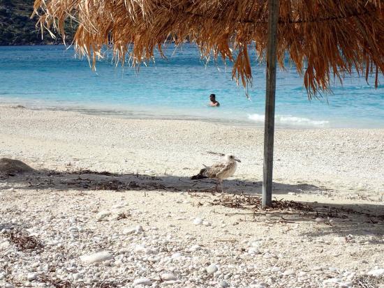 Zola, Grecia: A lovely beach