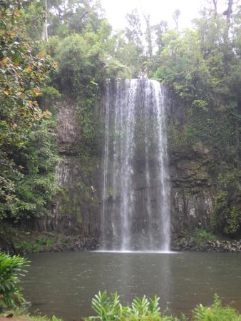 Kookaburra Lodge: Milaa Milaa Falls