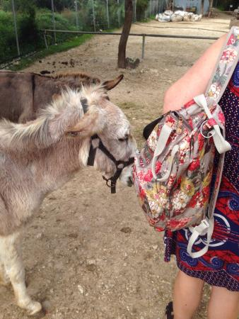 Had a nice time didnt realise how friendly donkeys are ...