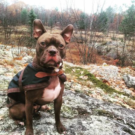 Kawartha Lakes, Canada : Doge loved it