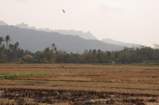 Hotel Rajasa: Вид с терассы