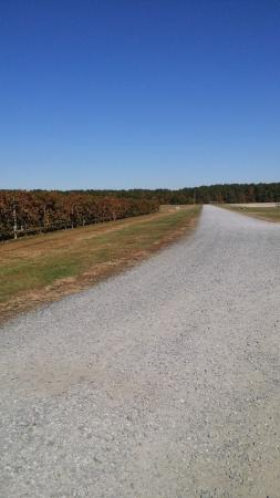 Layton's Chance Vineyard and Winery: Winery road view
