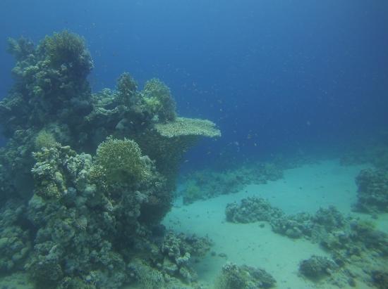 Sunshine Divers Club - Sharks Bay: дайвинг