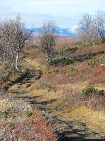 Oppdal Municipality, Norway: Trail near Gronbakken, e6 south of Oppdal