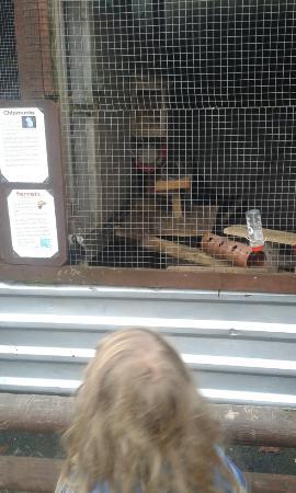 Bowland Wild Boar Park: Ferrets!