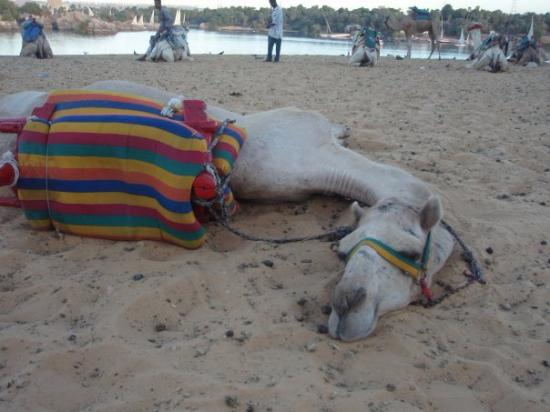 Monastery of St. Simeon : After my camel ride, Ramble immediately napped & I wanted to join him