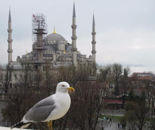 โรงแรมเตอร์โคมาน: View of Blue Mosque and Bosphorus from breakfast area