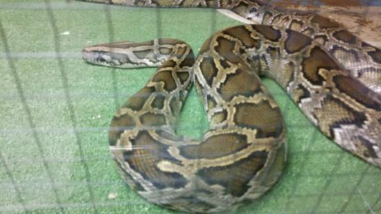 Japan Snake Center