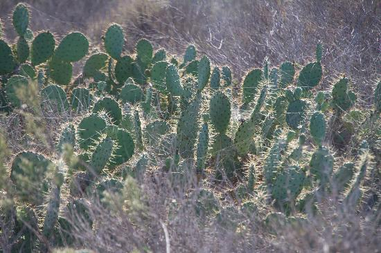 Gunpowder Point: Cacti