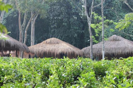 Nature Hunt Eco Camp, Kaziranga National Park: outside