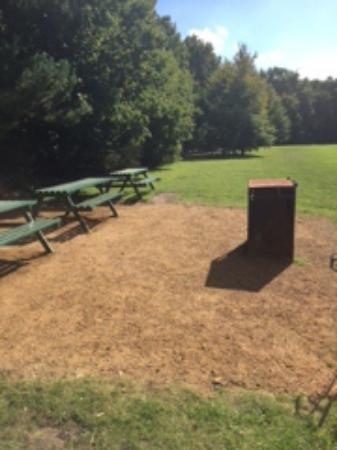 Frimley Lodge Park: More benches than people