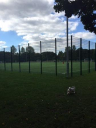 Frimley Lodge Park: Surrey Heath prevents mass immigration from playing football