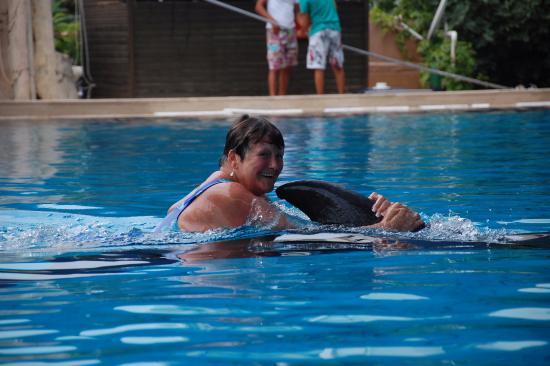 kemer - Foto van Dolphinarium Kemer, Kemer - TripAdvisor