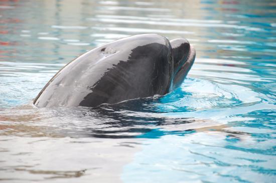 kemer - Picture of Dolphinarium Kemer, Kemer - TripAdvisor