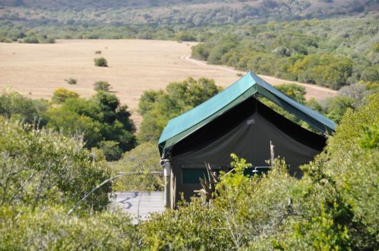 HillsNek Safaris, Amakhala Game Reserve: Tent & view
