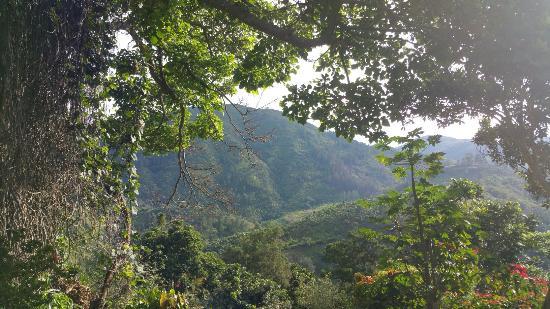 Newcastle, Jamaïque : 20151021_080159_large.jpg