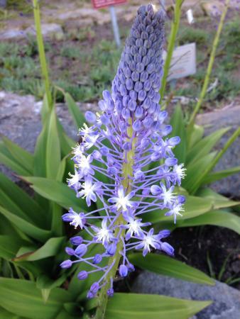 Newlands, South Africa: Jardín botánico de Kirstenbosch