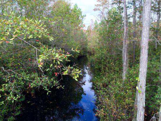 Okefenokee Swamp Park Boardwalk to observati...