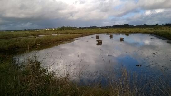 Marais de Lasne