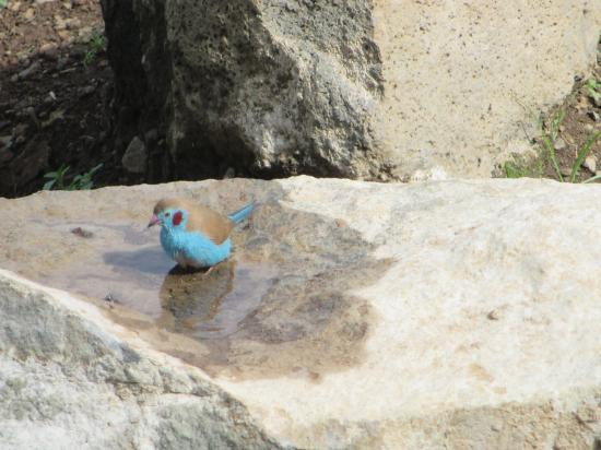 Salayish Lodge and Park: So much bird life