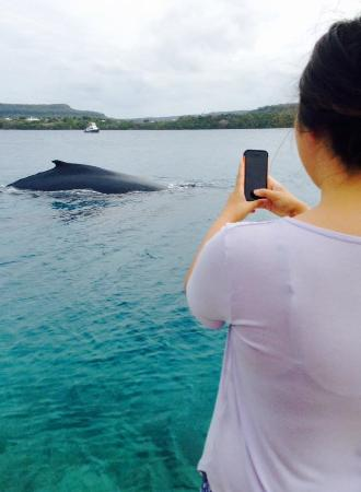 Tongan Beach Resort : Whale sighting just off Tonga Beach Resort