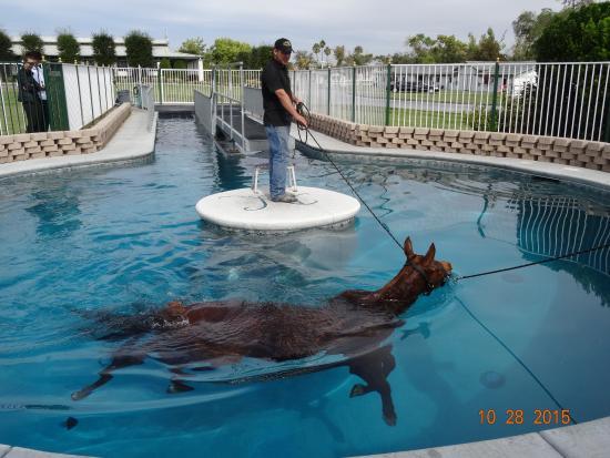 Horse Swimming Pool Picture Of Wayne Newton 39 S Casa De